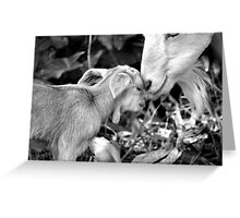 Kidding Around 3 - A Mother's Love Greeting Card