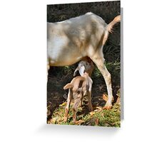 Kidding Around 4 Greeting Card
