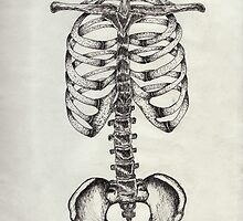 Bones by marissamint