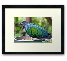 Multi Colored Poofy Bird Framed Print
