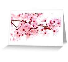 Pink Blossoms on White Greeting Card
