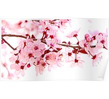 Pink Blossoms on White Poster