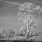 The trees that are slow to grow bear the best fruit by Mel Brackstone