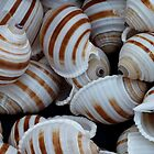 Stripey Shells by Yampimon