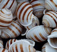 Stripey Shells by Yampimon