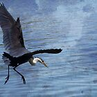 Heron in Flight by BoB Davis