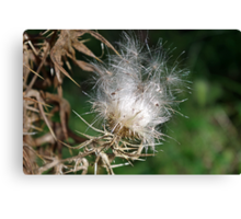 Thistledown - The Wish Factory Canvas Print