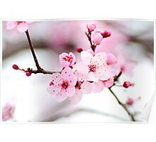 2013 Spring Blossoms Poster