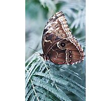 Winters butterfly scene Photographic Print