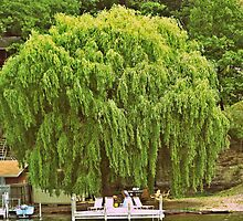 Willow Tree and Boat nature and nautical photography by jemvistaprint