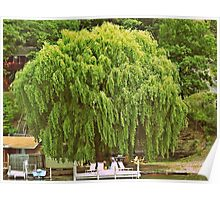 Willow Tree and Boat nature and nautical photography Poster