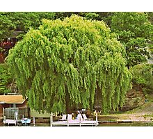 Willow Tree and Boat nature and nautical photography Photographic Print
