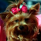 Her Pinkness by ArtbyDigman