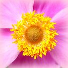 Japanese Anemone by ©The Creative  Minds