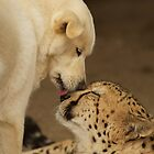 Love and Let Love by Peggy  Woods Ryan
