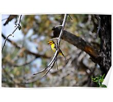 Western Tanager Poster