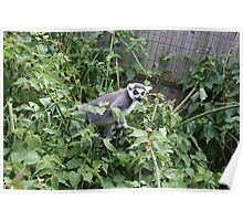 Lemur on the Loose Poster