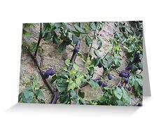 Damson Fruits Greeting Card
