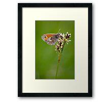 Small Heath Butterfly Framed Print