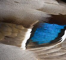 Mallard Wing Close Up by Heidi Stewart