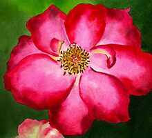 Tennessee Rose Watercolor by AngelaBishop