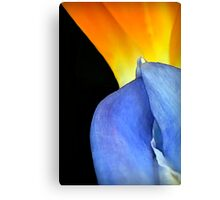 Complimentary Colors of Nature Canvas Print