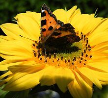 Butterfly Break by ElsT