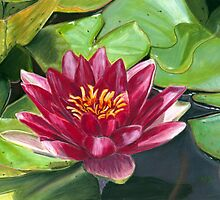 Among Lily Pads Pastel by AngelaBishop
