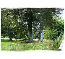 Beautiful Trees Hof ter Linden - Edegem - Belgium Poster