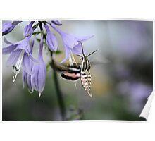 Morning Nectar Poster