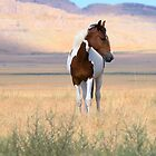 Onaqui Mustangs 2014 by Kellith