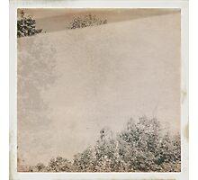 Split-Tree-Soup Photographic Print