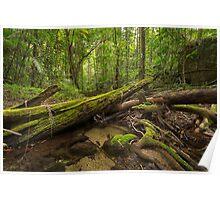 'Mossman Gorge, Daintree National Park, North QLD' Poster