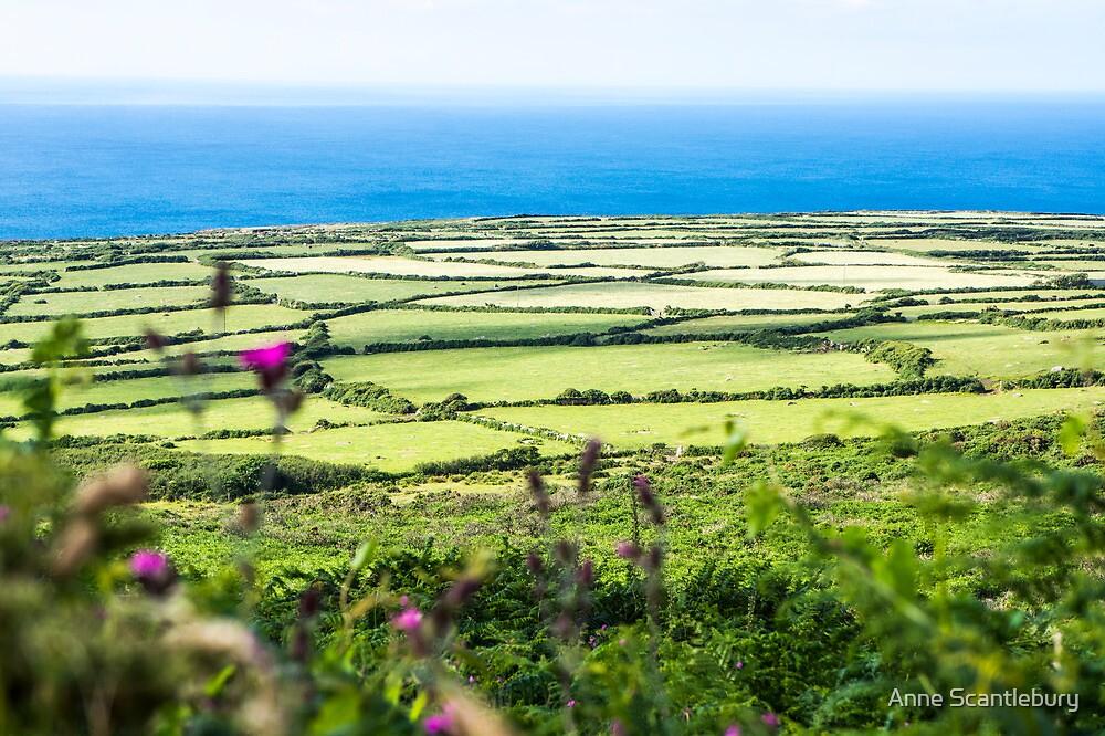 fields by Anne Scantlebury