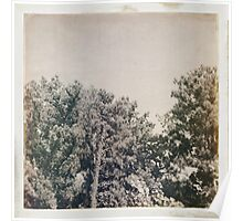 LoMo Trees Poster