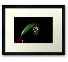 Kangaroo Paw Blossom and Bee Framed Print