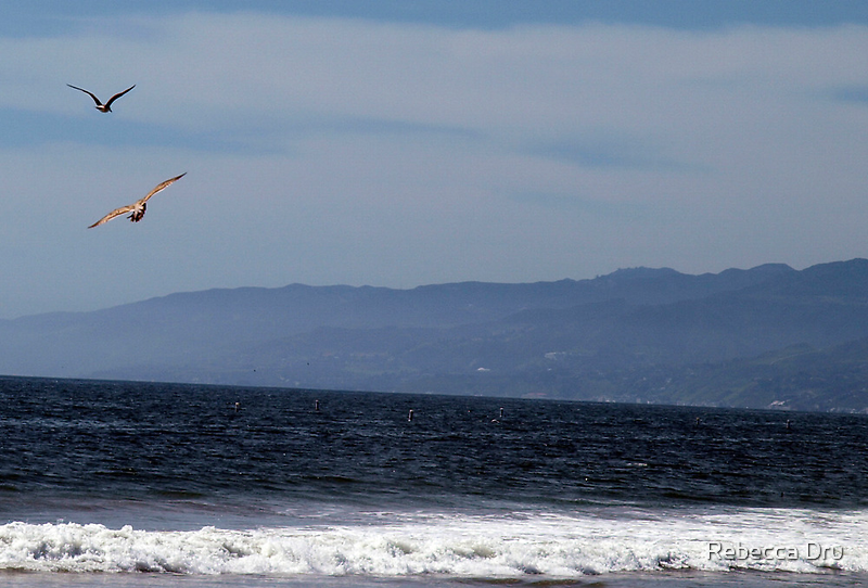 Birds Flying At The Beach by Rebecca Dru