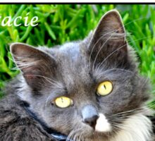 I LOVE MY CAT - Gracie Sticker
