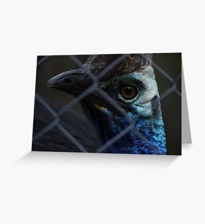 The Cassowary  Greeting Card