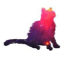 Serene Kitty Photographic Print