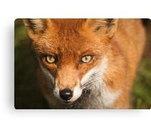 Penetrating Stare Canvas Print
