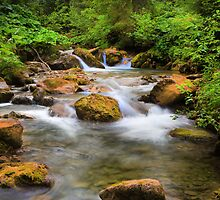 A Swiss stream. by Dave Hare