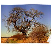 A Norfolk Hedgerow Poster