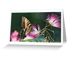 Eastern Tiger Swallowtail Butterfly and Mimosa Flower Greeting Card