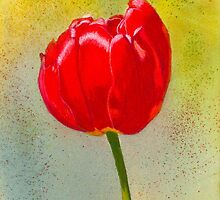 Sunny Day Tulip Watercolor & Pastel by AngelaBishop
