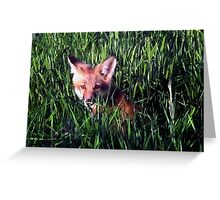 Fox in the Grass Greeting Card