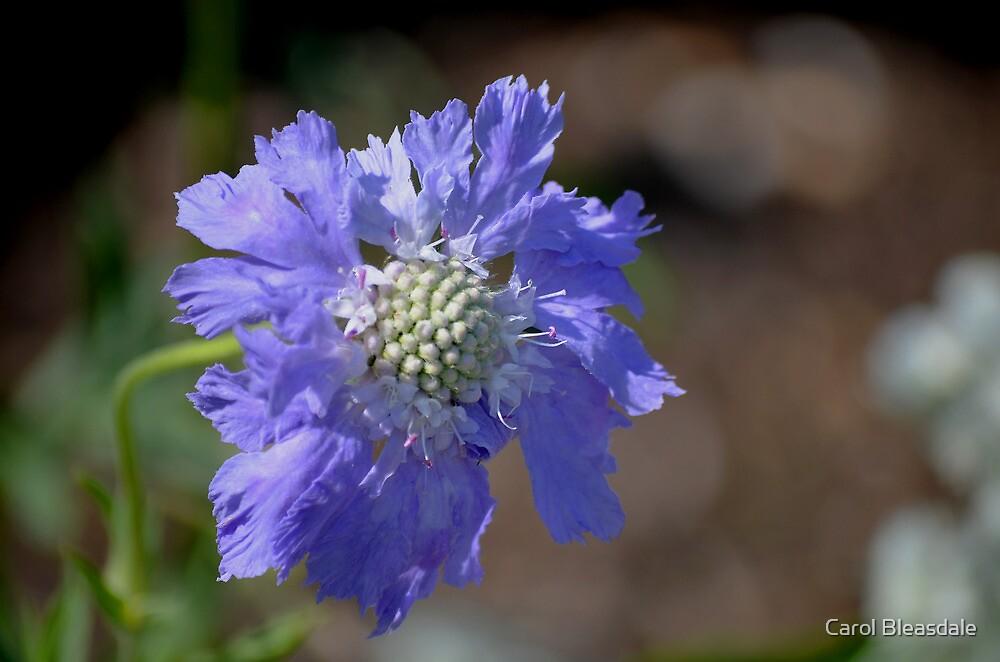 Bluer Than Blue by Carol Bleasdale