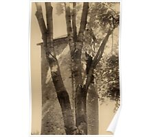 Bellfry and tree in sepia-tone Poster