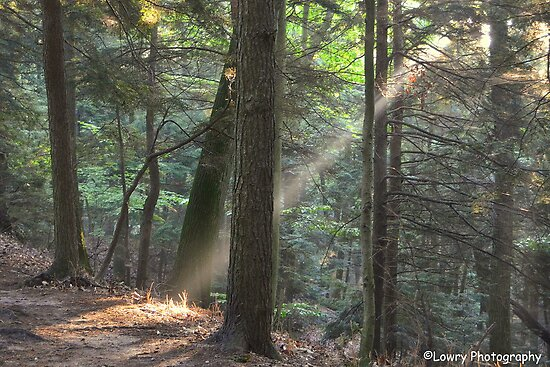 Sun Ray Through The Forest by BarbL