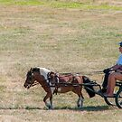 Tiny Pony Out for a Carriage Ride by Daphne Eze